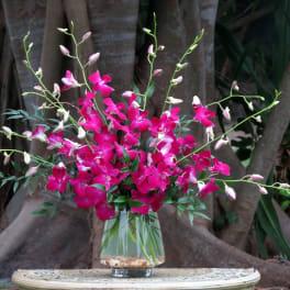 Maui Waui Dendrobium Orchids