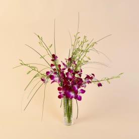 McShan Purple Dendrobiums