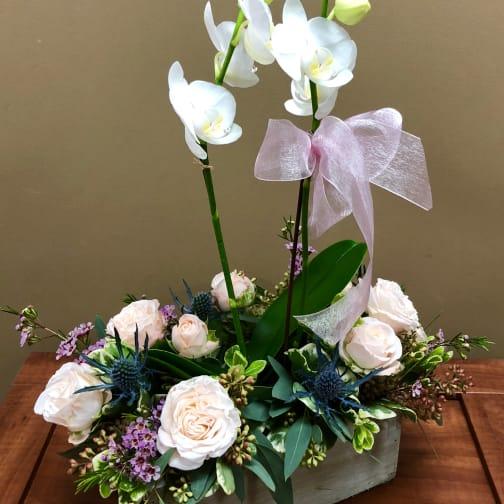 Orchideas Bombasticas