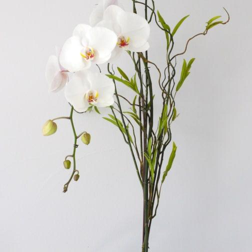 Los Angeles Florist | Flower Delivery by LA Orchidia