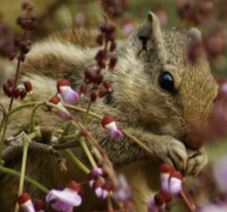 Squirrels Verses Tulip Bulbs Blog Bennett S Flowers