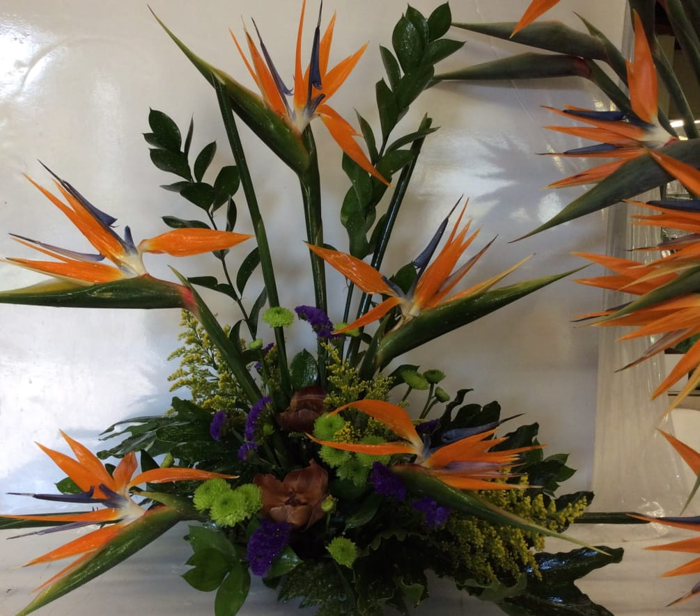 1cb269f31d3 Make a statement with this stylized arrangement of birds of paradise, brown