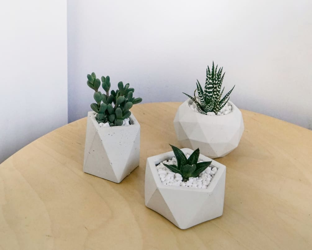 Hand Craft Geometric Concrete Planter With Succulent White By