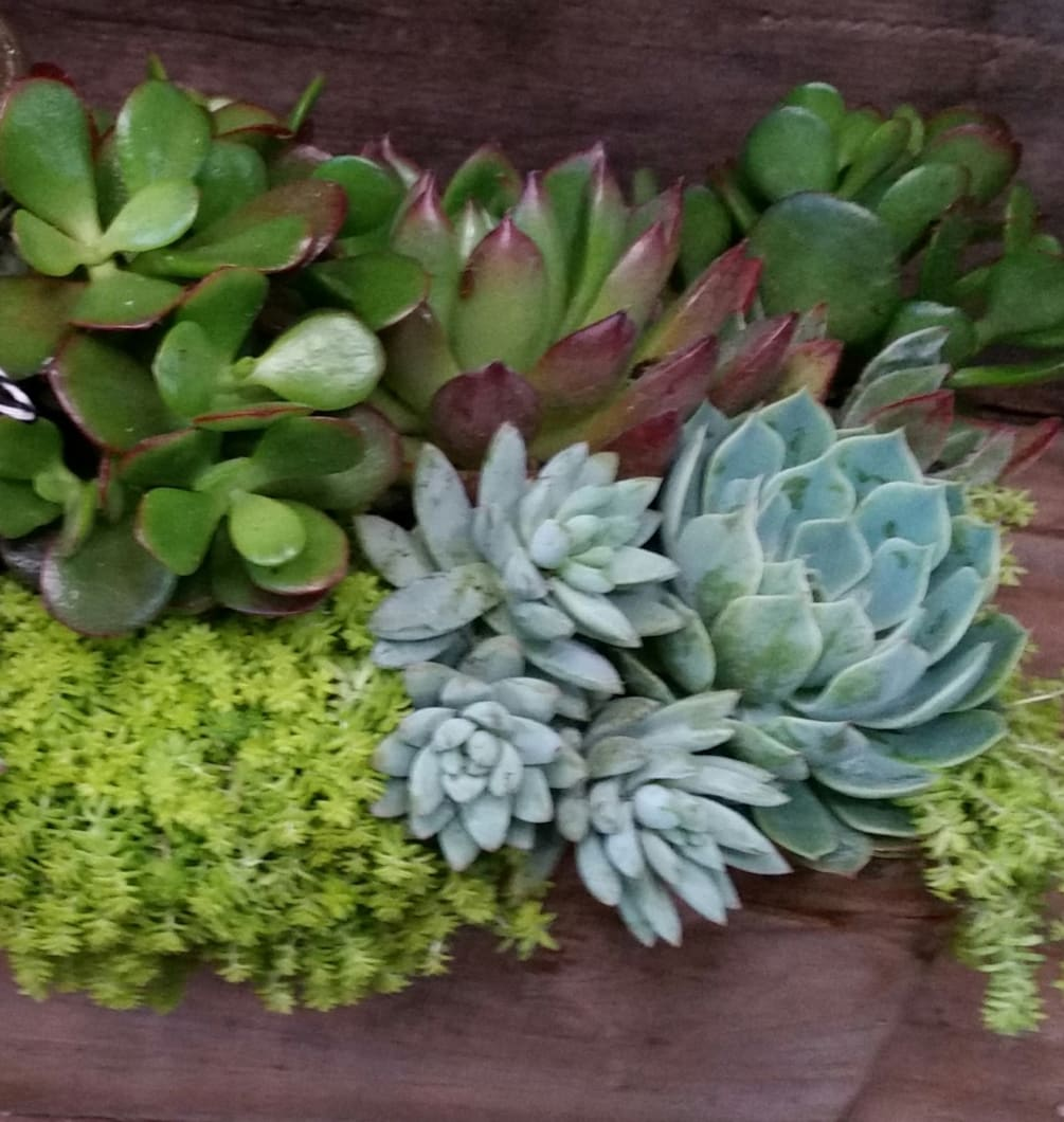 Succulent Garden By Heaven Sent Design Floral Studio