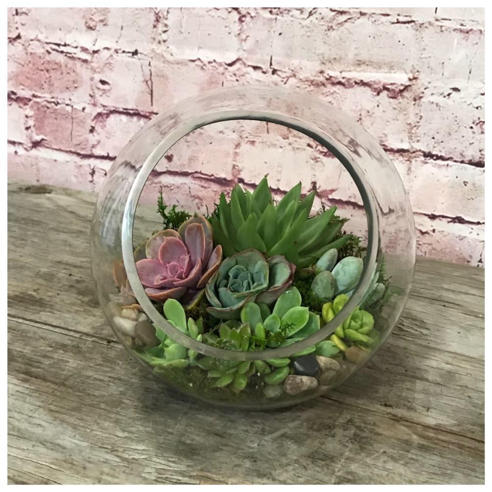 Succulent Terrarium By Le Fleur Floral Couture