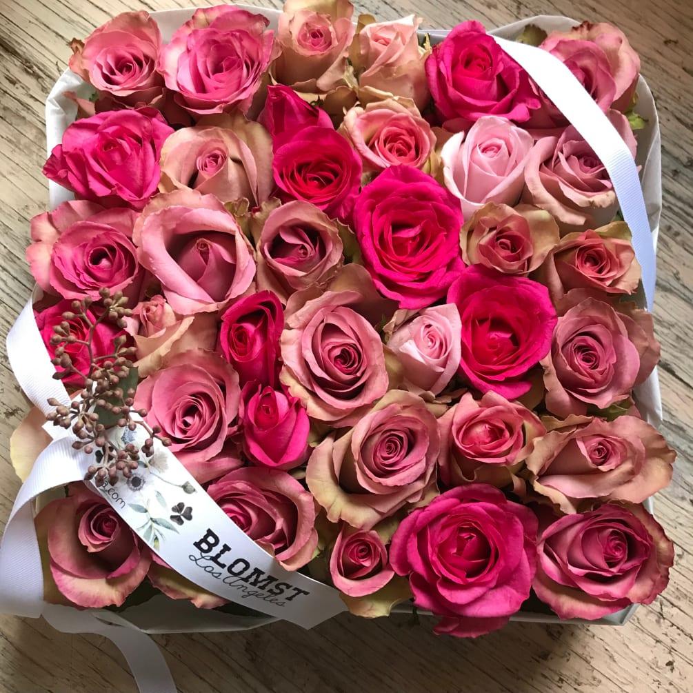rose blomst