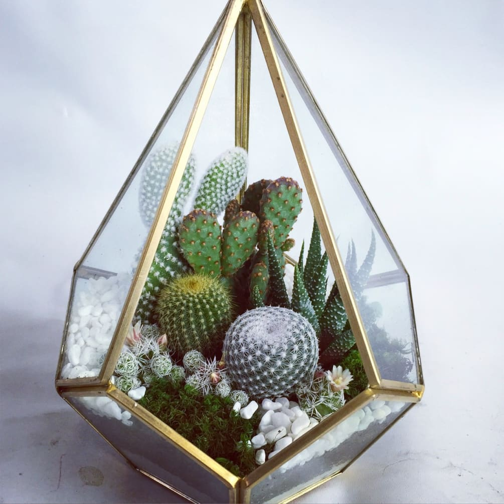 Wowsome Geometric Terrarium Cactus Or Succulents By Wowsome Blossom