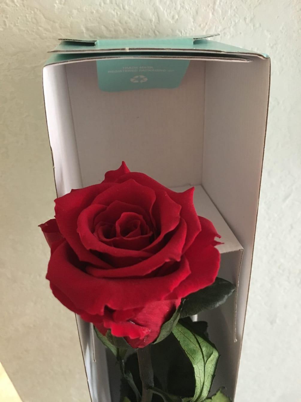 Forever Rose By Yosvi Flowers