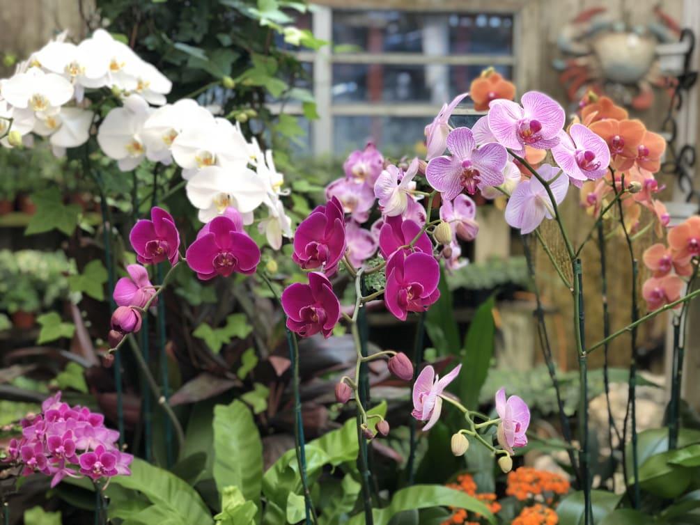 Custom Orchid Plant Arrangement