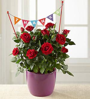 Thankful Rose In Mini ChattanoogaTnChattanooga Plant Moments Florist pSUVMqzG