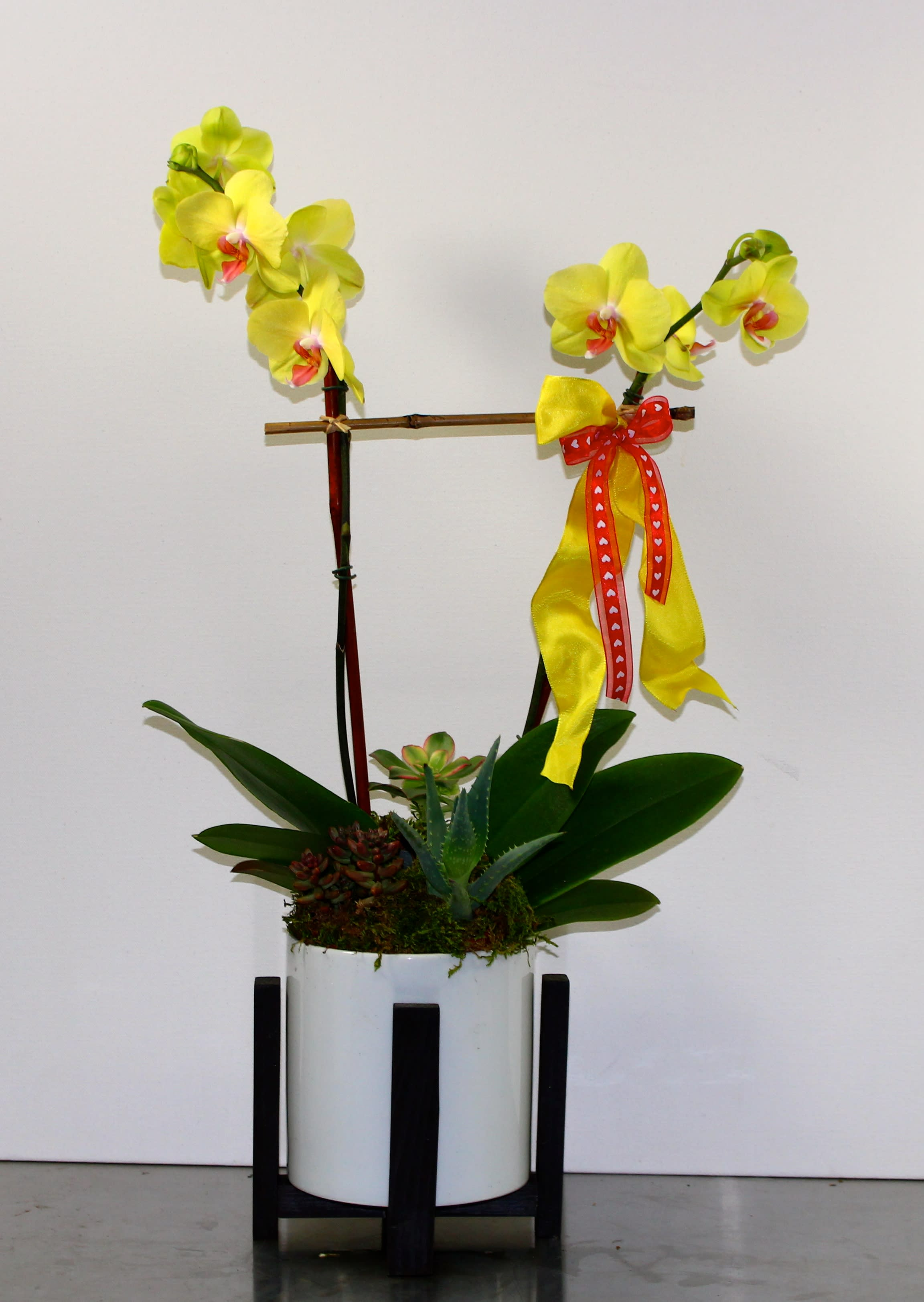Double-Stem Yellow Orchids