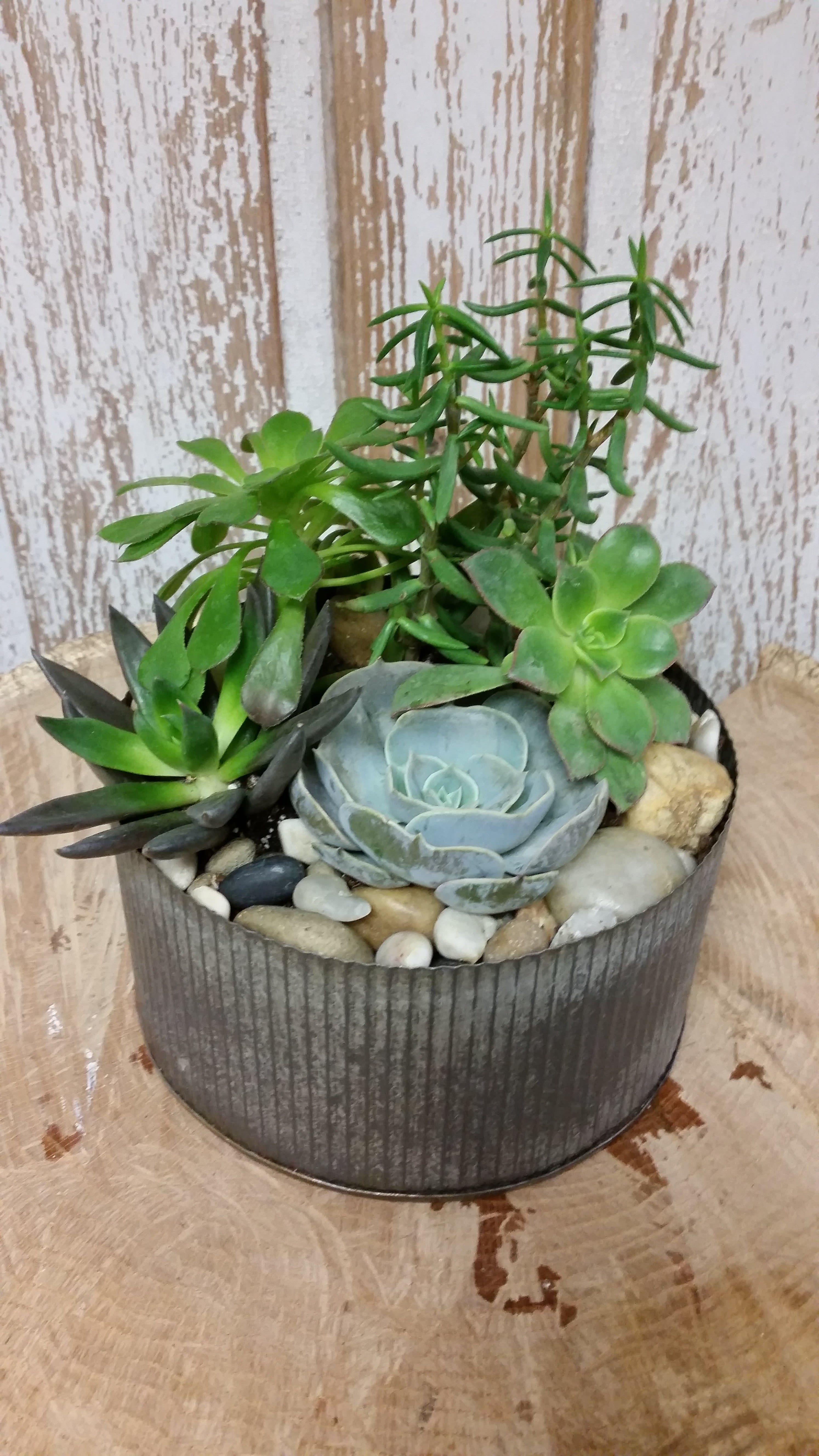 Succulent Rock Garden In Salem Nh Ford Flower Co