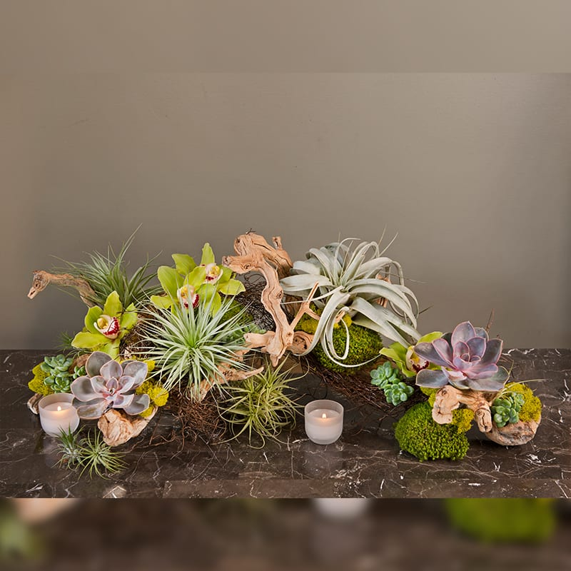 Succulents On Driftwood In Pacific Palisades, CA