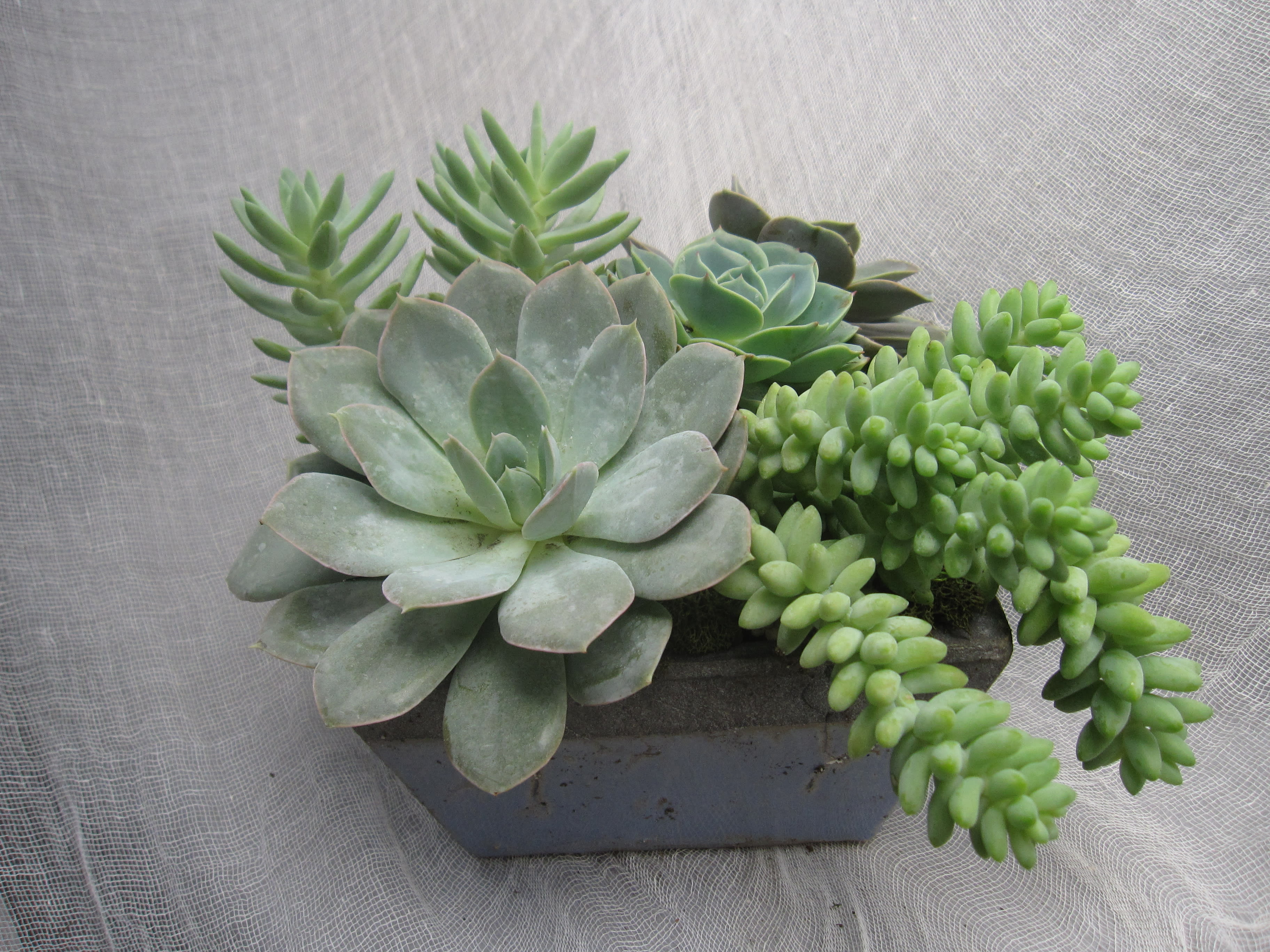 Succulent Garden In Pacific Palisades Ca Palisades Flowers Inc