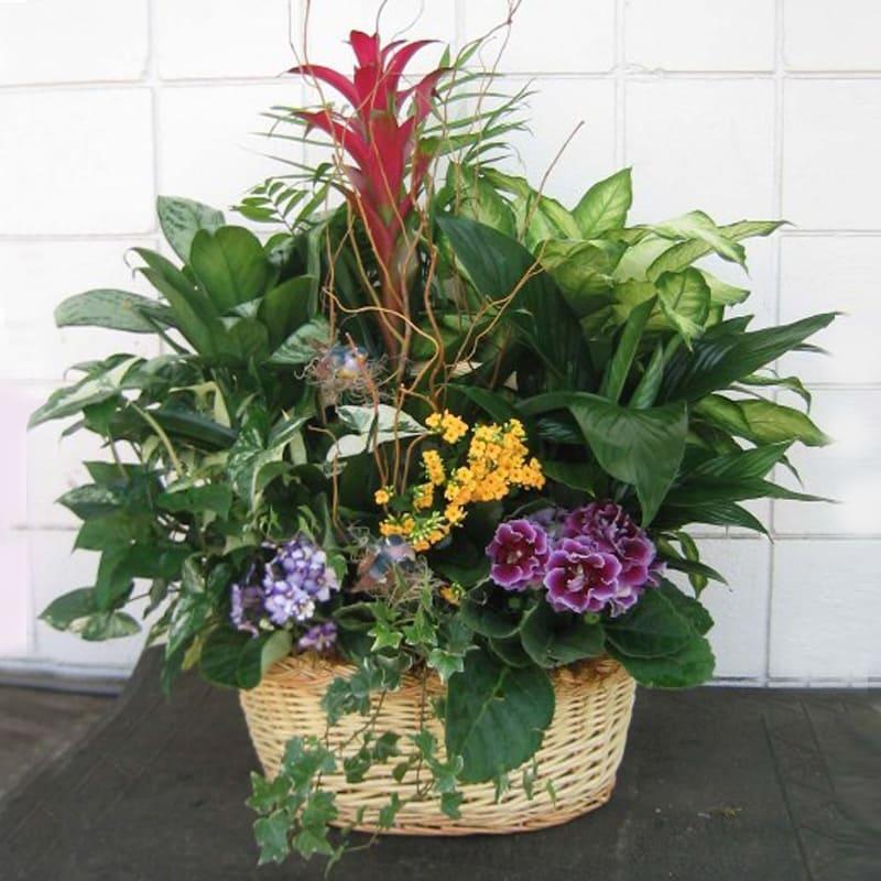 European Garden 108 In Anaheim Ca Visser S Florist