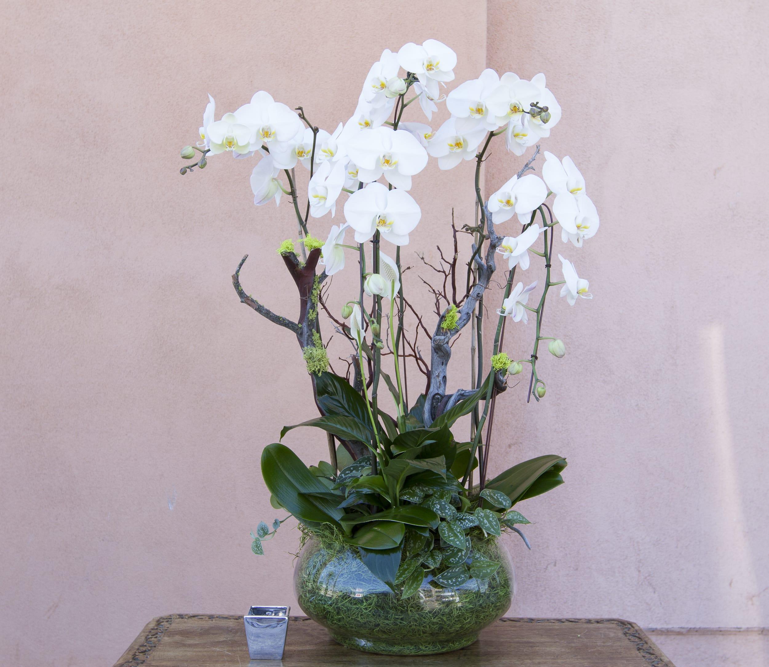 orchid arrangement 21