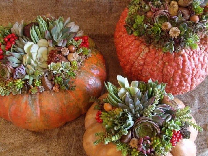 Succulent Pumpkins Ea By Fioridesigns Cc