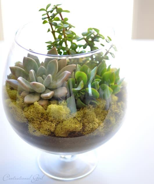 Glass Succulent Terrariums By Urban Poppy