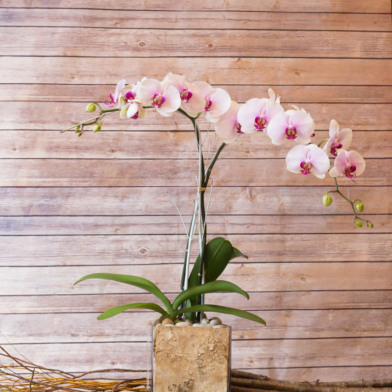 Style Me Pretty White Phalaenopsis Orchid In New York
