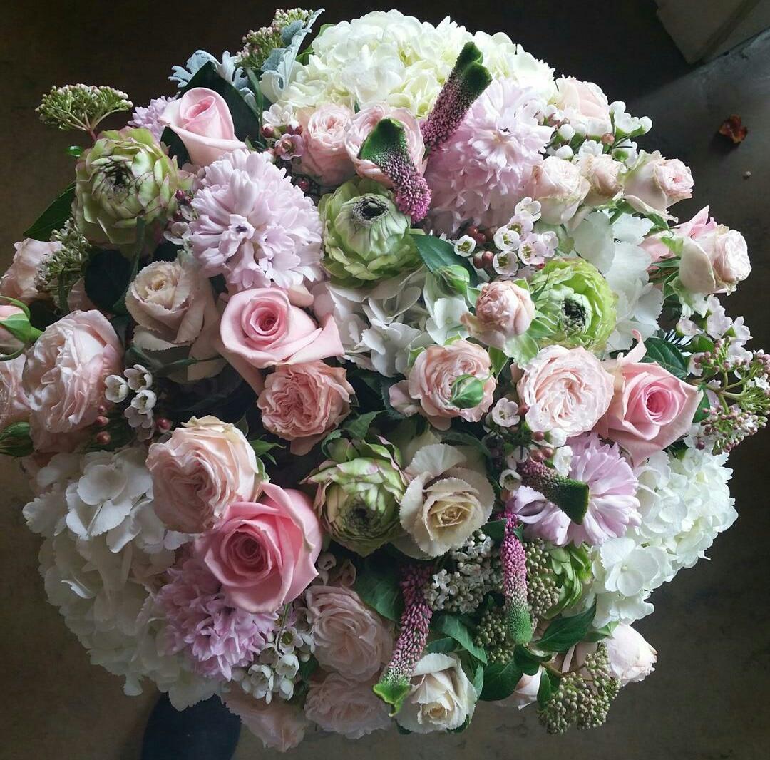 Elegant Rose In Del Mar Ca Jolie Fleur
