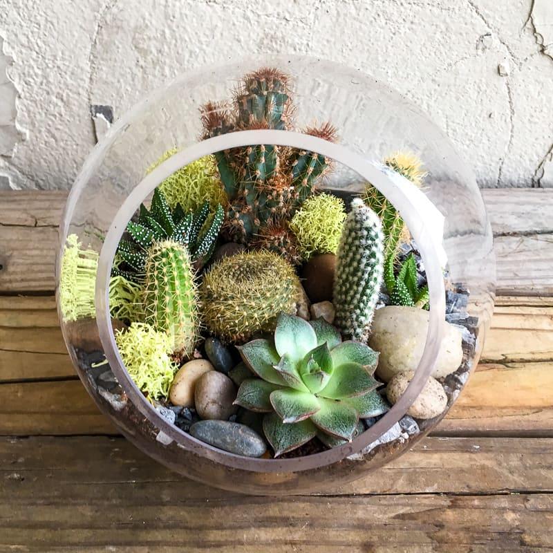 Succulent Terrarium Small Bubble In Washington Dc Urban Jungle