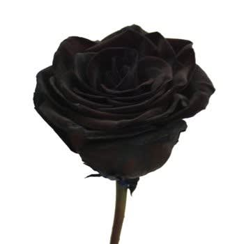 Natural Red Rose Dyed Sprayed Black In Brooklyn Ny Flowers By
