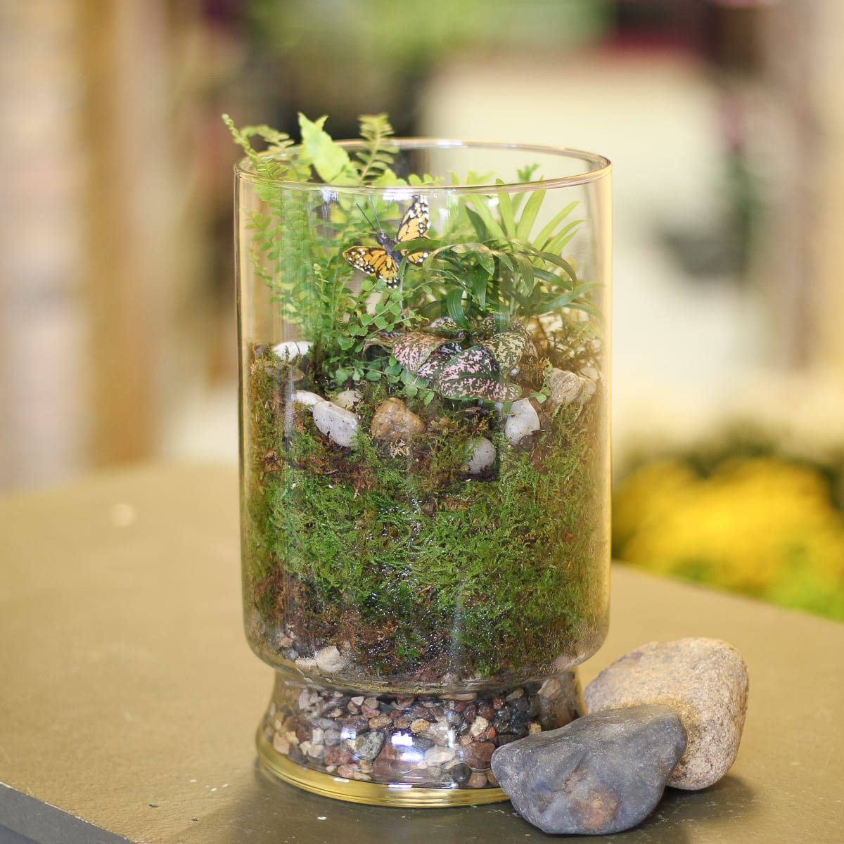 Tiny Wonders Terrarium In Anoka Mn Main Floral