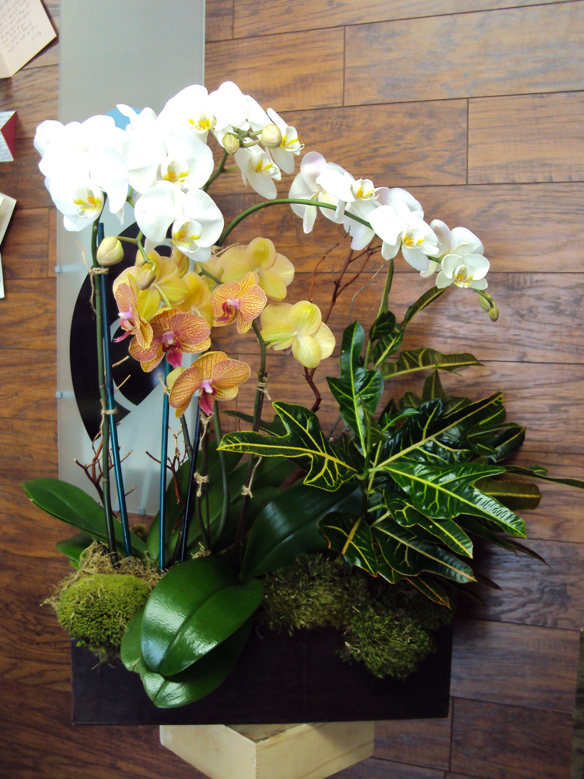 Phalaenopsis Orchids and Indoor Plant Mix in El Segundo, CA | Natural  Simplicity