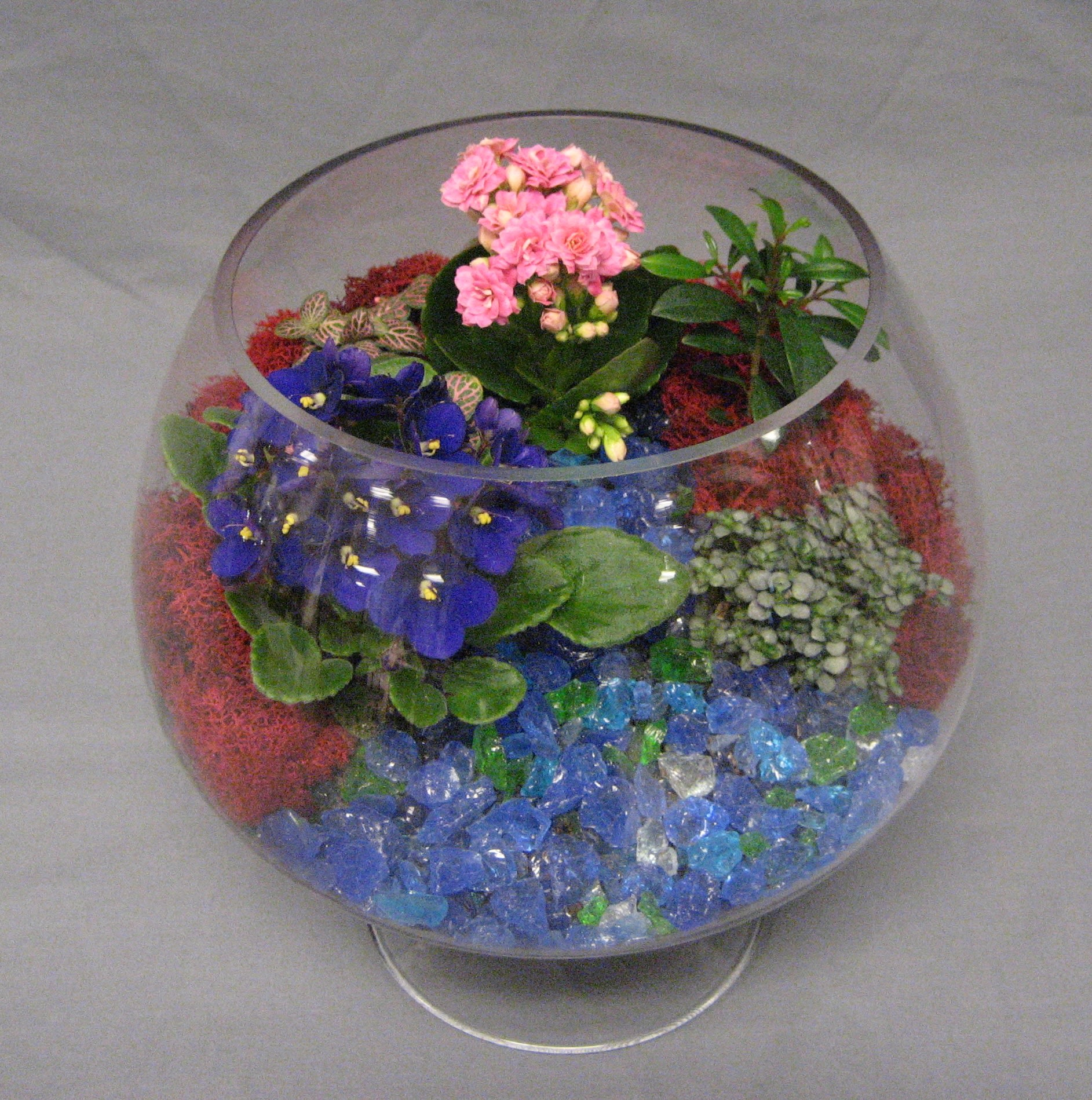 Terrarium Gh002 Terrarium Gh002 45 00 Same Day Delivery Add