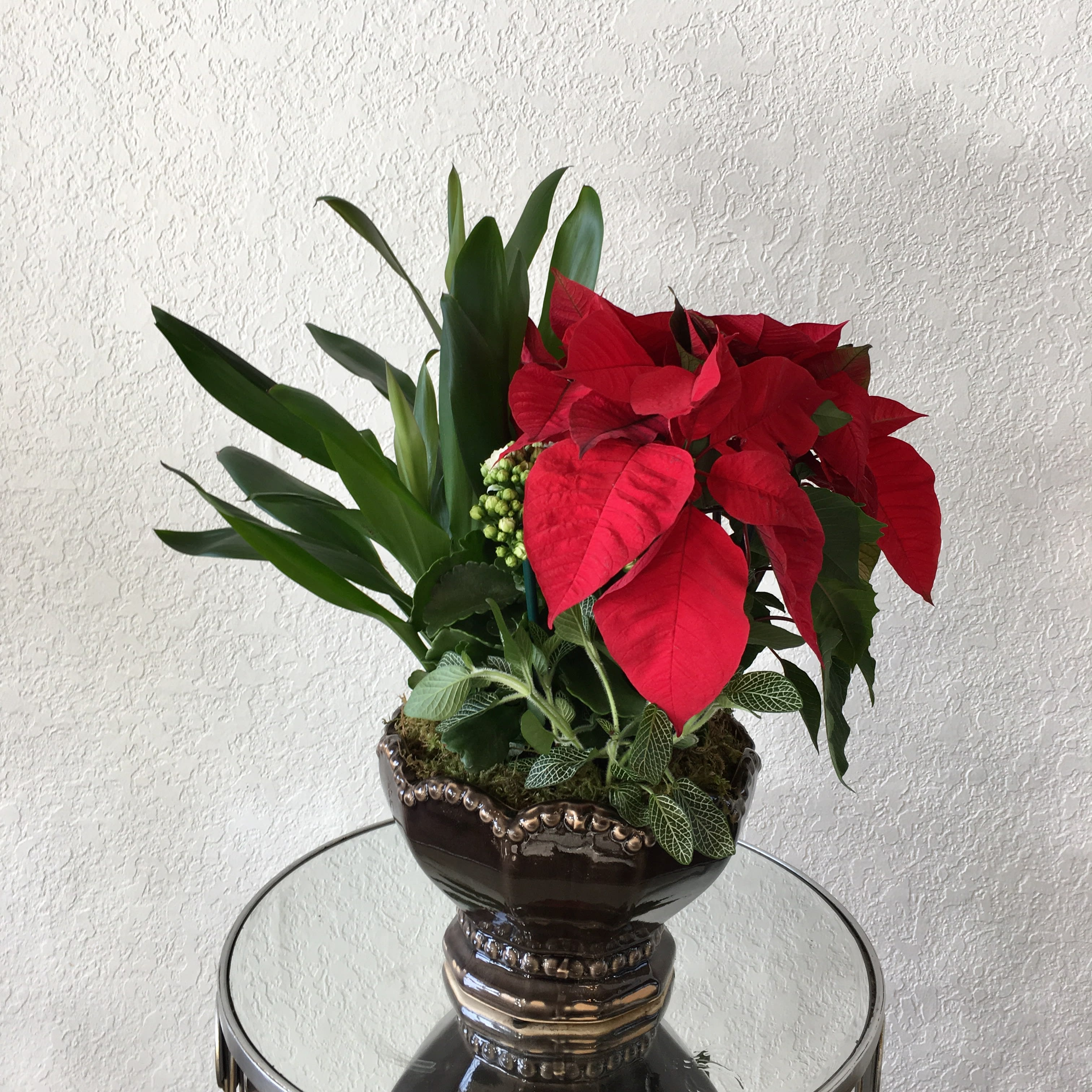 Potted Poinsettia In Glendora Ca Glendora Florist