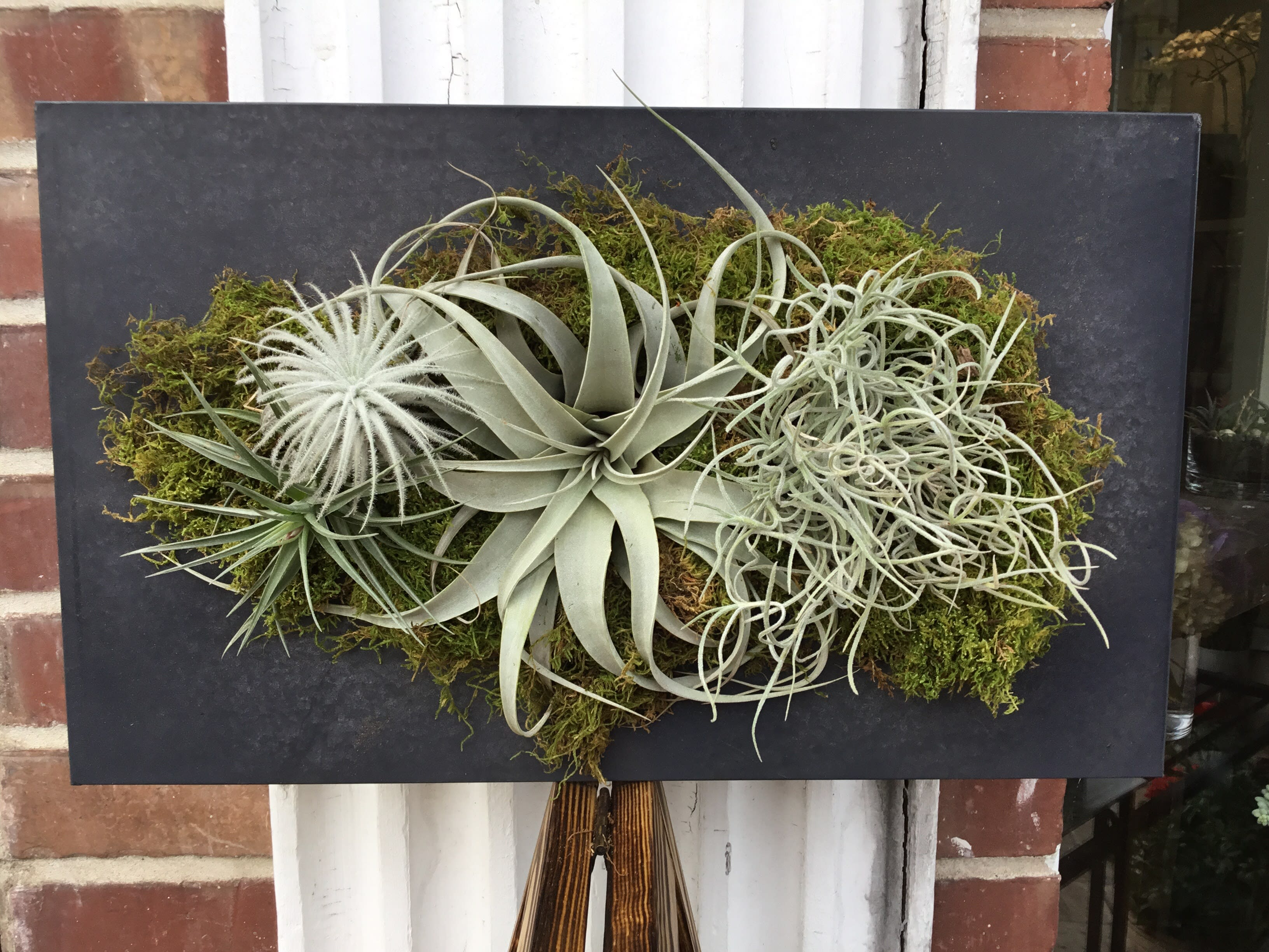 air plant wall hanger in burlingame ca floral art and decor. Black Bedroom Furniture Sets. Home Design Ideas