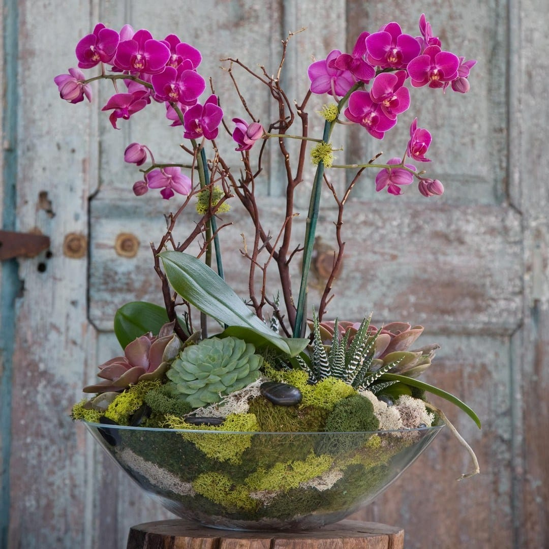 Orchid | Succulent Gift