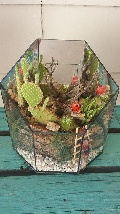 Santa Fe Cactus Garden In Glendale Az Glendale Flowers