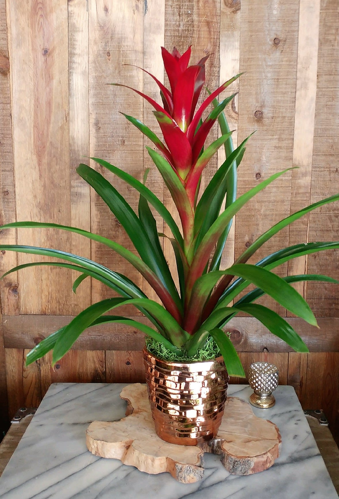 Exotic Bromeliad In Las Vegas Nv Windmill Floral Expressions