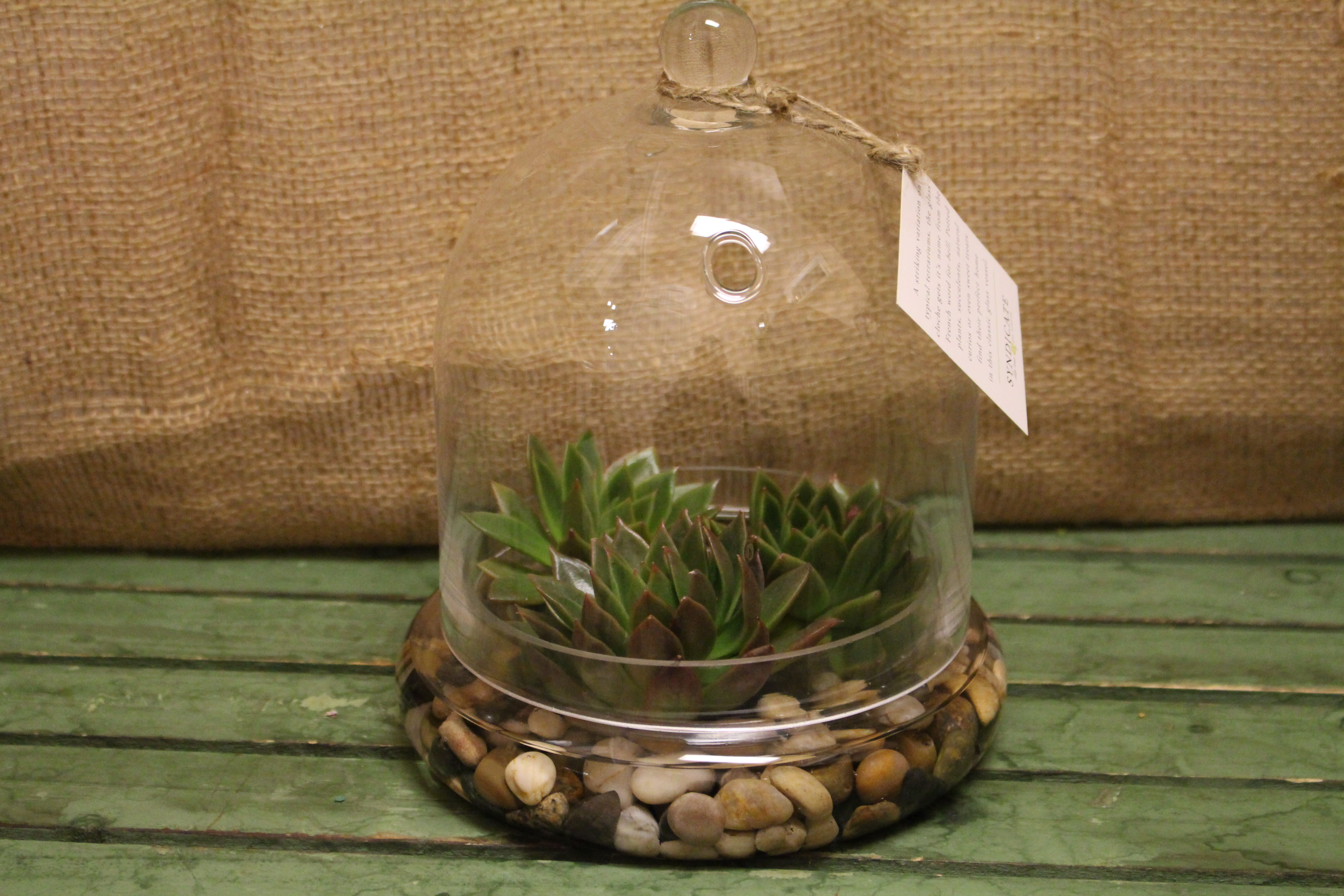 Succulent Terrarium In Stoneham Ma Evergreen Florist Inc