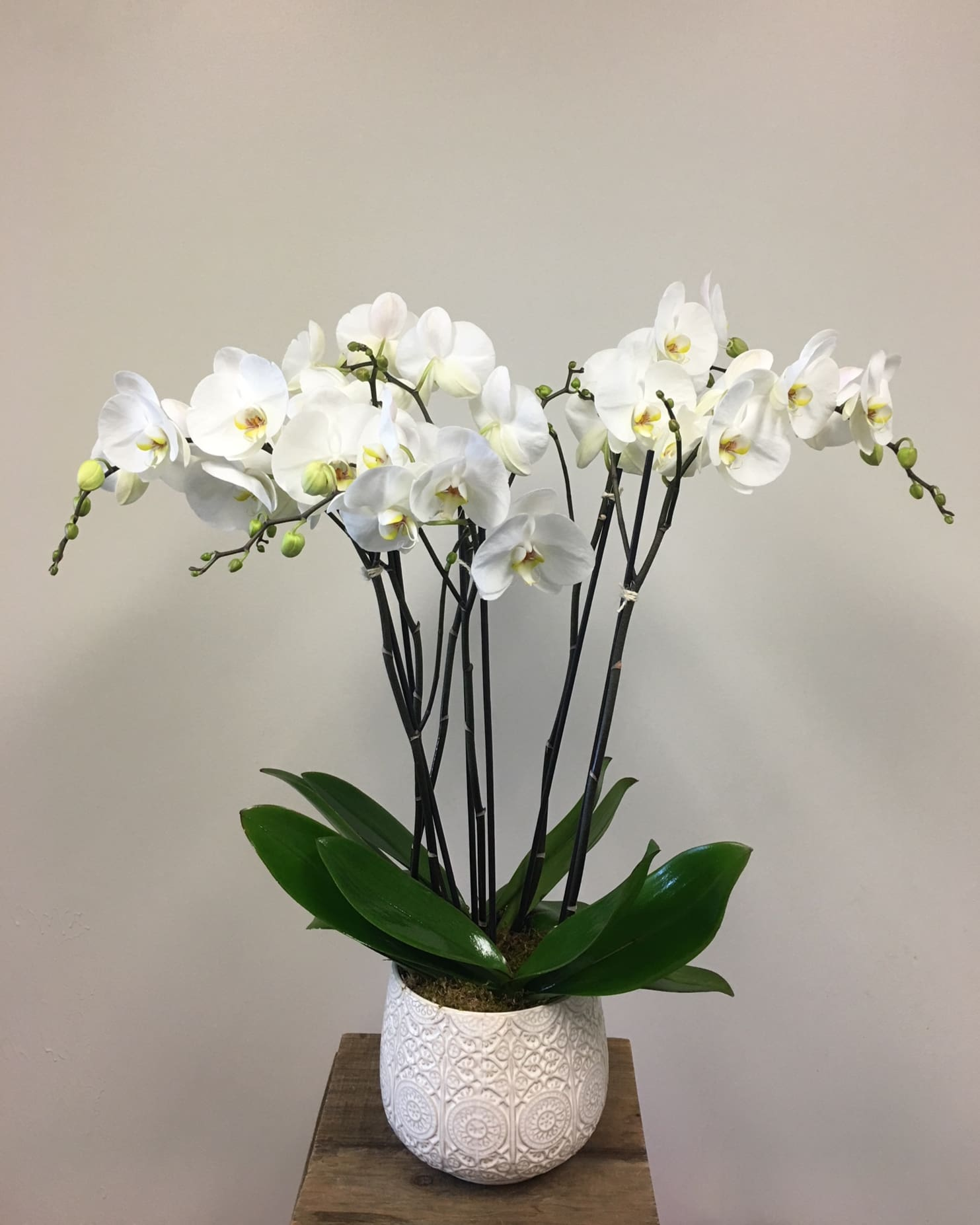 Beautiful White Orchid Planter In Menlo Park Ca Twig And Petals