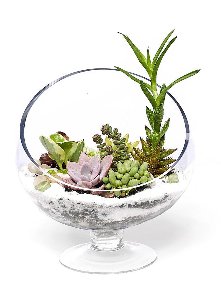 Terrarium Planter Bowl By Old Town Florist