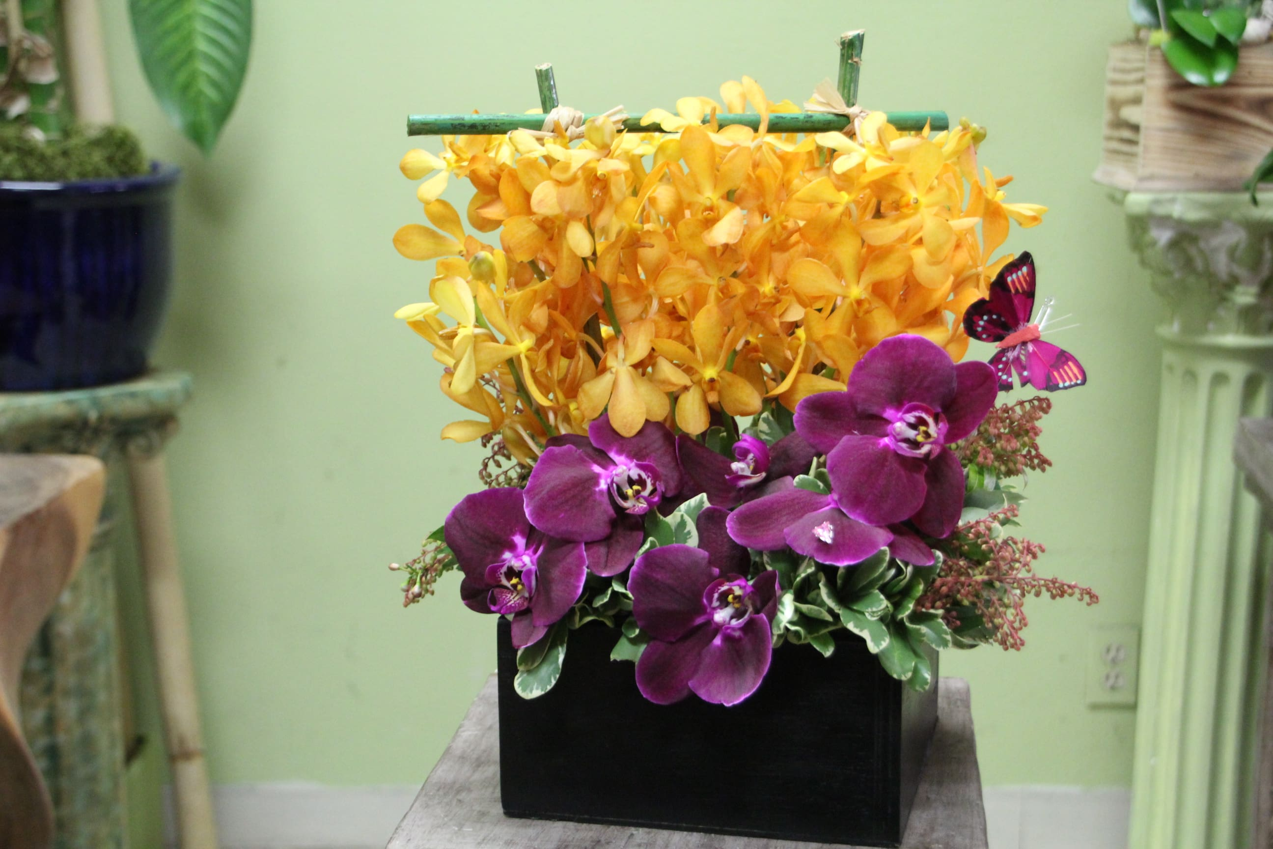 Linda Tropical Exotic Orchids With Bamboo In Torrance Ca Andes