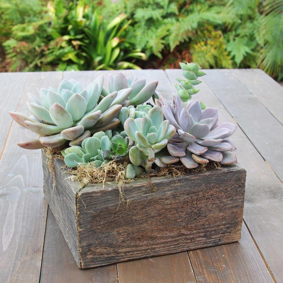 Succulent Garden In A Box In Denver Co Vavabloom Floral