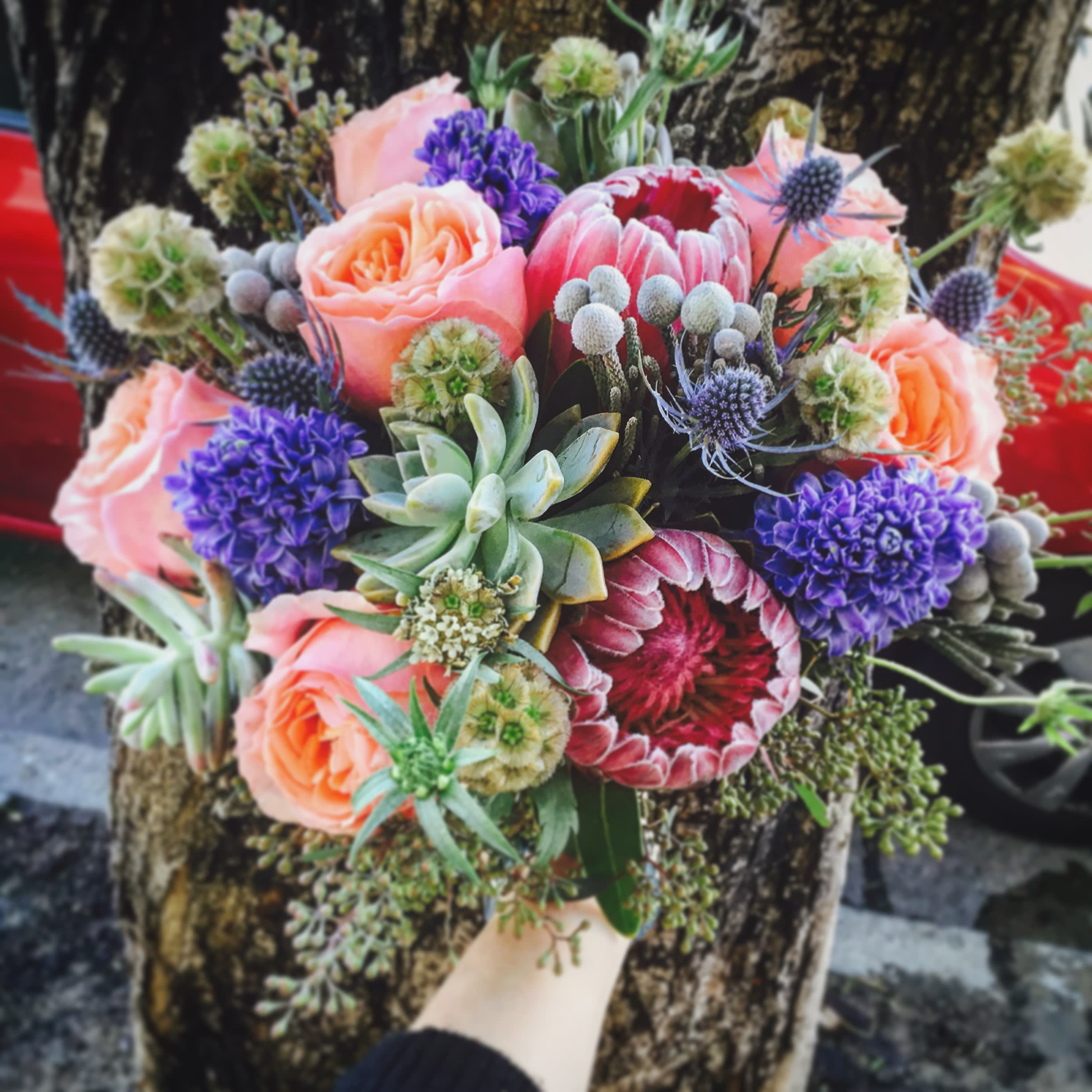 A Single Bloom Protea Bouquet: Succulent And Protea Bouquet (Pre-order) In San Francisco