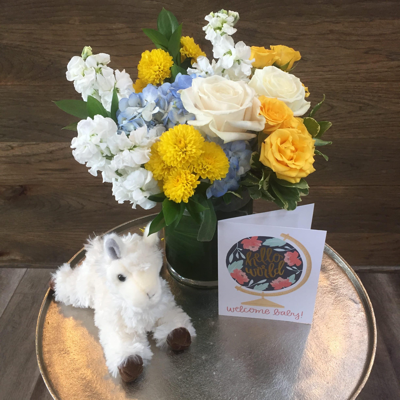 Welcome Baby Boy In Denton Tx Flowergarden 118