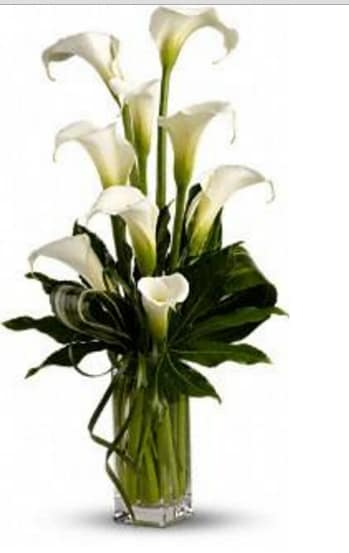 Calla Lilies In Brooklyn Ny Greenpoint Floral Co