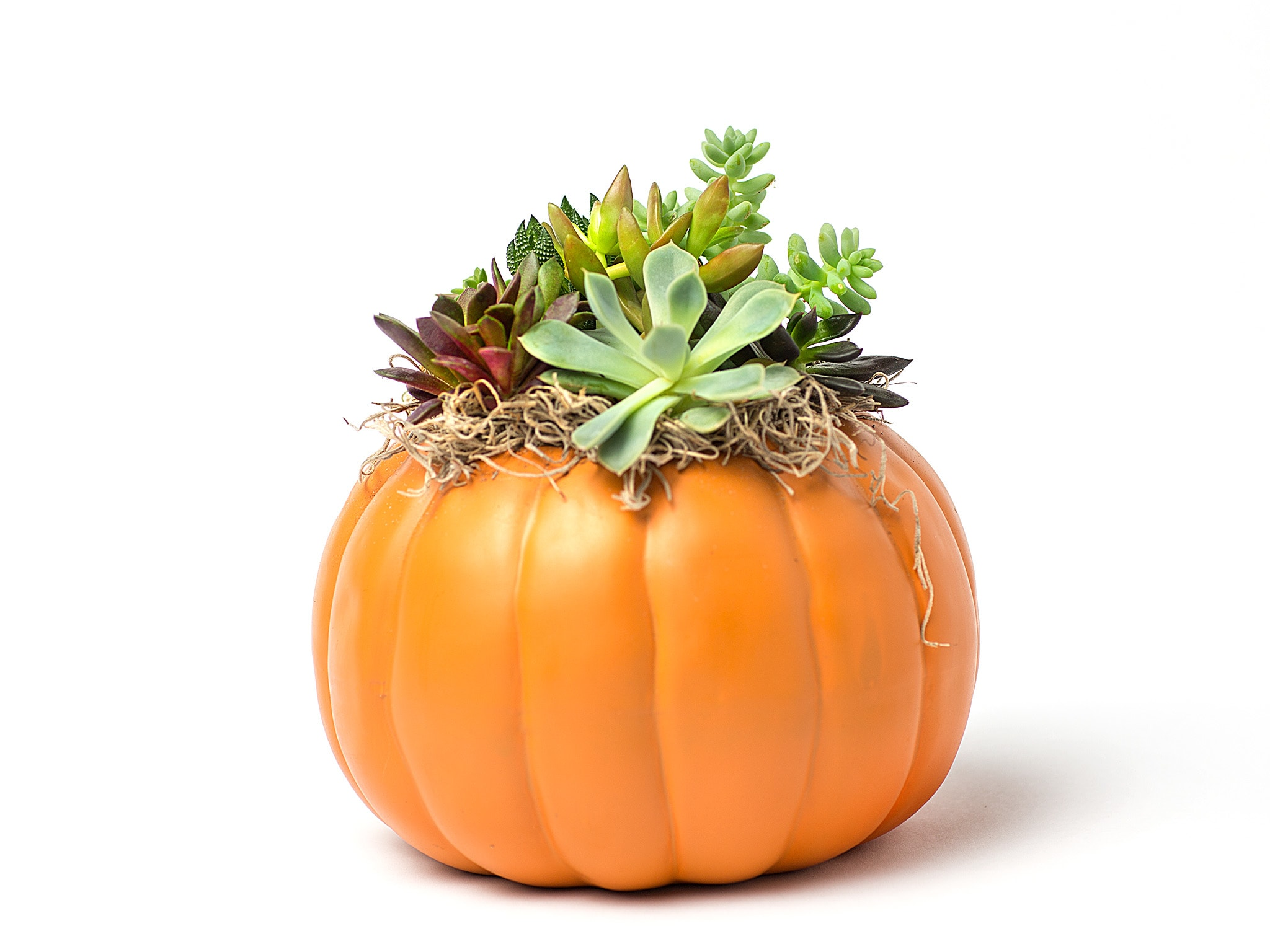 Succulents In A Pumpkin In Portland Or Old Town Florist