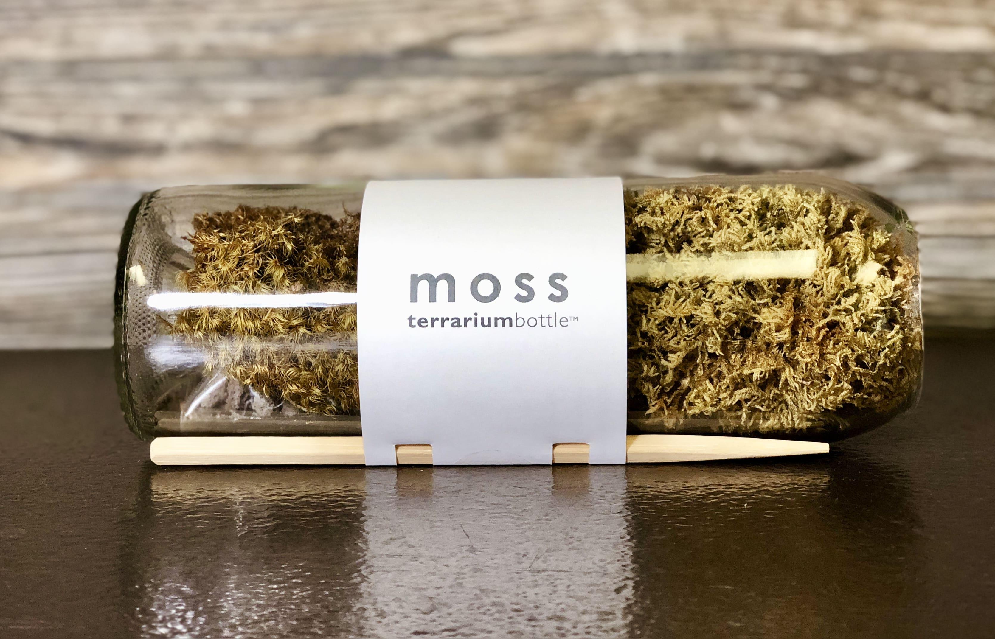 Moss Terrarium Bottle In Beachwood Oh Paradise Flower Market