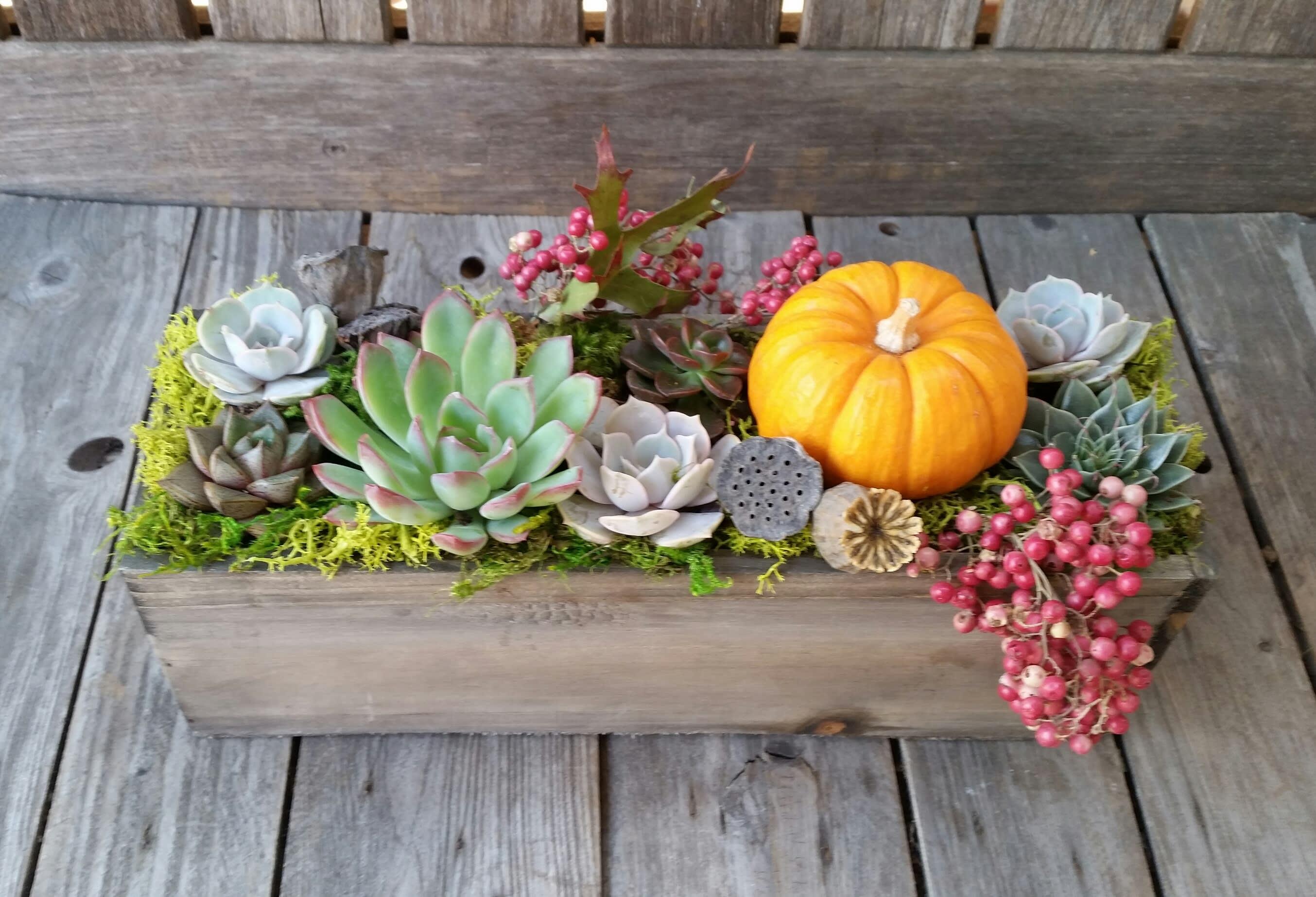 Succulent Pumpkin Centerpiece Sm By Orchard Nursery Florist