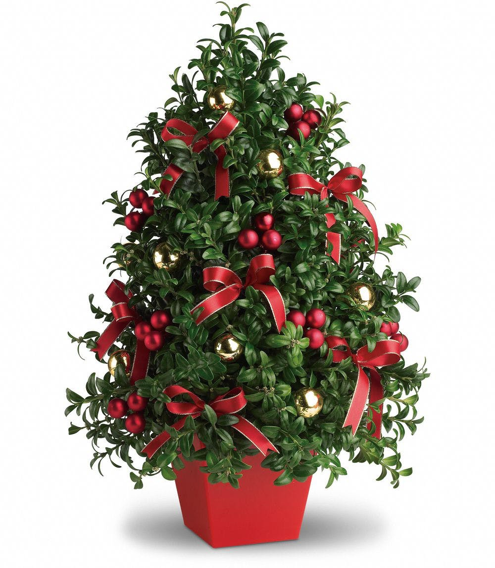 This special little Christmas tree blooms with joy and festive fun to