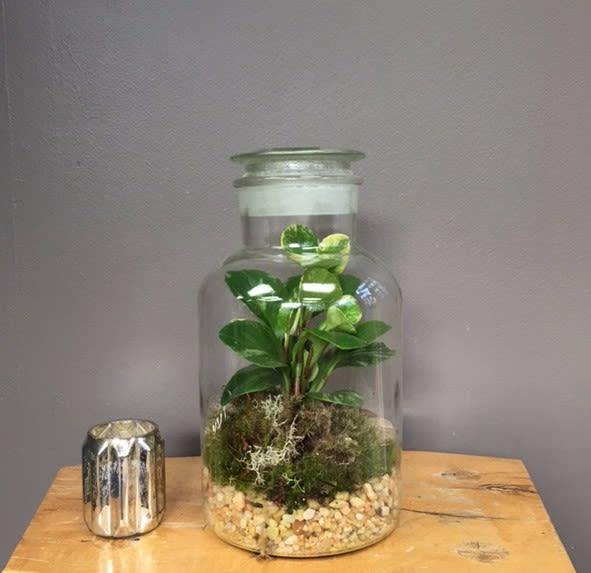 Apothecary Jar Terrarium In Pittsford Ny Pittsford Florist