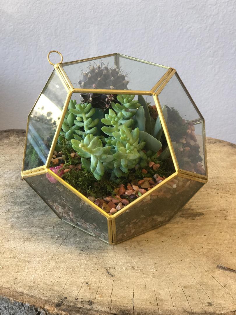 Succulent Terrarium In Dallas Tx All Occasions Florist