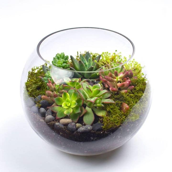 Terrarium Treat In Los Angeles Ca Flowers Pronto