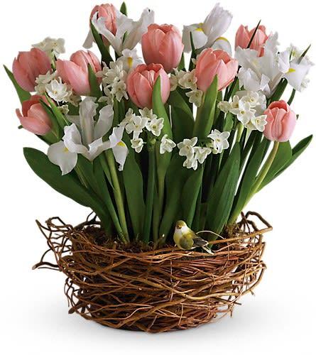 Tulip Song In Wimberley Tx Wimberley Flower Shop